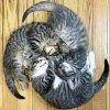 3 кота ава 100.jpg
